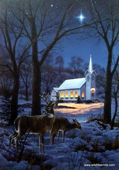 A MIDNIGHT CLEAR is a peaceful winter scene as whitetail deer linger near a church under the night light of a bright star reminiscent of the Christmas story.
