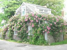 Cottage Photography  Pastel Pink Nantucket Cottage by CapeCodHome, $20.00