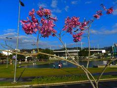 Lagoa parque Ramiro Ruediguer, ao fundo ginasio Galegão,ao lado do Parque Vila Germanica, onde aconteçe a Oktoberfest, em Blumenau-SC