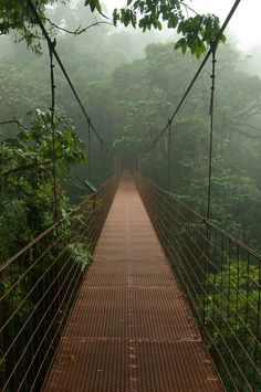 0rient-express:  Hanging bridge in the canopy (by ClifB).