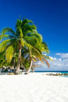 Sri Lanka is alles wat je verwacht bij het denken aan een tropisch eiland! Mooie zandstranden, helder blauw water, palmbomen en een super lekkere temperatuur! 🌴🌊☀ https://ticketspy.nl/deals/jouw-droomreis-naar-sri-lanka-begint-hier-va-e610/