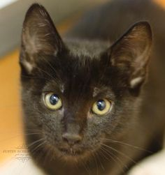 Egg was adopted on 7/21/14!