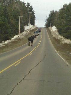 Maine Traffic Jam