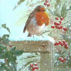 Christmas Card Sayings, Christmas Bird, Christmas Graphics, Christmas Paper, All Things Christmas, Vintage Christmas, Robin Bird, Bird Pictures, Winter Art