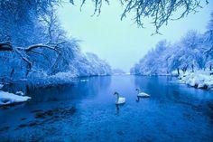 Winter beauty ❄❄