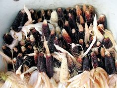 Dakota Black Popcorn Seeds ★ Rare Zea Mays ★ Grow Your Own Popcorn ★ 50+ Seeds★
