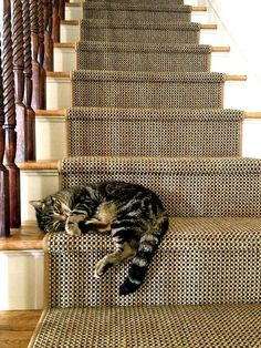 kitty on the stairs