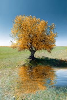 ~~Spring | lone olive tree | by Alfon No~~