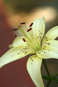 Lily http://media-cache-ec3.pinterest.com/upload/218987600603318470_yWUvwyGA_c.jpg