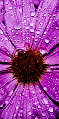 Purple Pins For Pinterest @ http://baenk.com/purple #purple