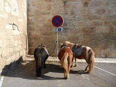 http://pgzo.blogspot.nl/2014/11/parkeren-overlast-voor-gehandicapten-in.html