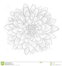 aster tattoos - Google Search