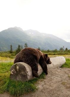 Tired Bear :)