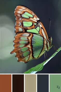 ZJ Colour Palette 479 by imelda Color Schemes Colour Palettes, Colour Pallette, Color Palate, Color Combos, Design Seeds, Nature Paintings, Color Swatches, Color Of Life, Color Theory