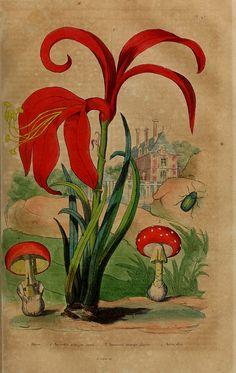 Dictionnaire pittoresque d'histoire naturelle et des phénomènes de la nature. v.1 Paris,1833-[1840]