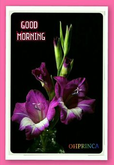 Good Morning Good Morning Flowers, Good Morning Good Night, Morning Wish, Morning Images, Morning Quotes, Days Of The Year, Morning Greeting, Good Thoughts, Blessed