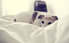 14 Dogs Who Will Do Anything To Get Into Bed With You