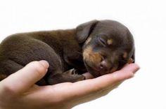 Baby Puppies | Unique Puppy Names