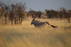 Afrika ist ein unglaublich vielseitiger Kontinent! In zwei Teilen stelle ich die schönsten Nationalparks und Safarierlebnisse im ebookers Reiseblog vor. Foto: Botswana von Benjamin Hollis bei Flickr : CC BY 2.0