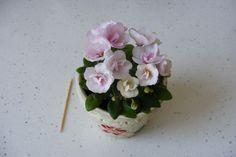 African violet leaf *N-Lija Bebi**russian/ukrainian***miniature *** Saintpaulia, African Violet, Violets, Houseplants, Bloom, Leaves, Minis, Flowers, Trail