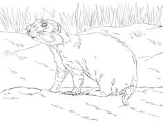2c721ca32a9f c6f838d76d3b1 prairie dogs animal coloring pages