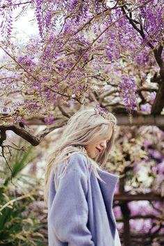 MONTENEGRO (Dara Muscat in Wisteria blooming) / TANIA BERRIES