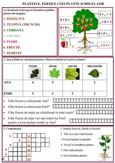 Plantele. Părțile unei plante și rolul lor English Worksheets For Kids, Preschool Worksheets, Preschool Learning, Math For Kids, Activities For Kids, Homework Sheet, School Frame, Math School, Plant Science
