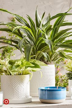 Add greenery to planters of different textures and colors. Group them together and layer in different heights for a stylized look. House Plants Decor, Plant Decor, Outdoor Plants, Garden Plants, Exotic Flowers, Beautiful Flowers, Lawn And Garden, Home And Garden, Beautiful Home Gardens