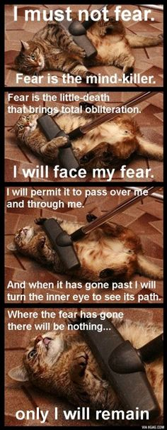 dune kitty . Fear is the mind killer...