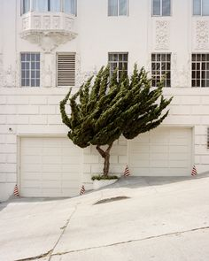 From the series California Topiaries by Marc Alcock