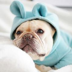 Bear Ears Dog Hoodies, Dog and Cat Sweater, Cat Clothes,French Bulldog Clothes, Pet Hoodies French Bulldog Meme, White French Bulldog Puppies, French Bulldog Clothes, French Bulldogs, English Bulldogs, Bear Ears, Cat Sweaters, Dog Hoodie, Tulum