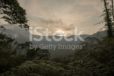 Sunset in the Rainforest of Colombia royalty-free stock photo Good Times, Things To Do, Royalty Free Stock Photos, Sunset, Photography, Outdoor, Image, Colombia, Things To Make