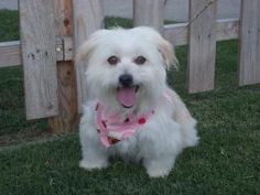 Here is one I might consider! Hi my name is Lucy and I am a 1yr old female Shi-poo.( Shi-Tzu/ Miniature Poodle). I am an adorable girl with a personality to match! I am crate traine...