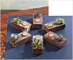 Brick Succulent Planters by readymade These would be so cute to make. Easy project for kids at church to do. Small container that fits in one side of the brick to hold the succulent plant.