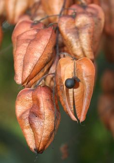 Seed Pods by mockba1_1999 - William Sutherland