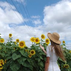 Find Sunflowers in Byron Bay, NSW, Australia at The Farm.