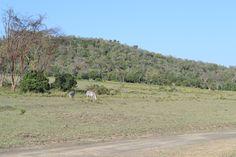 Walking close to zebras at Green Crater Lake