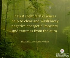 Seven First Light fern essences help to clear and wash away negative energetic imprints and trauma from the aura.