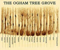 Ogham Tree Grove by Yuri Leitch
