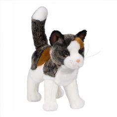 Douglas Reginald Calico/Tortie Cat