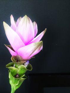 &SUUS | Presents Home | flowers | ensuus.blogspot.nl | #ensuusflowers