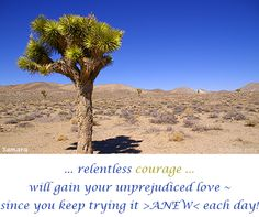 ... relentless #courage ... will gain your unprejudiced #love ~ since you keep trying it >ANEW< each day!
