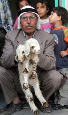 Two-headed animals and other bizarre creatures   Photo Gallery - Yahoo! News India: