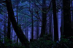 Rainforest Night Magic ~ Olympic Peninsula, Sitka Spruce Rainforest, Olympic National Park