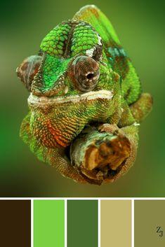 ZJ Colour Palette 236 #colourpalette #colourinspiration