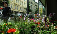 Cornucopia, Galerie IG Bildende Kunst Wien Indoor Plants, Outdoor, Visual Arts, Projects, Inside Plants, Outdoors, Outdoor Games, The Great Outdoors