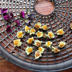 10 Unusual Ways to Use Your Food Dehydrator