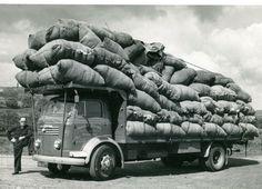 Dodge Trucks, Old Trucks, Vintage Trucks, Commercial Vehicle, Bradford, Transportation, Monster Trucks, Vehicles, 4x4