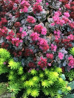 Evergreen Groundcover Plants: 20 Choices for Year-round Interest - Modern Evergreen Potted Plants, Evergreen Ground Cover Plants, Sedum Ground Cover, Evergreen Groundcover, Evergreen Flowers, Evergreen Garden, Best Ground Cover Plants, Succulent Ground Cover, Flowering Plants