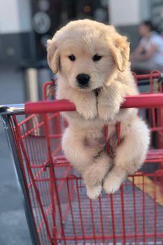 Super Cute Puppies, Cute Baby Dogs, Cute Little Puppies, Cute Cats And Dogs, Cute Dogs And Puppies, Cute Little Animals, Doggies, Funny Animals With Captions, Cute Funny Animals